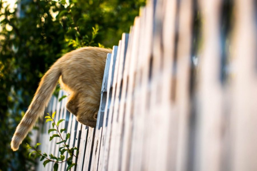 Cat Jumping Fence